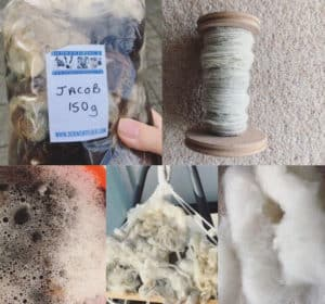 Images showing stages of fleece spinning, from raw fleece, washing, drying, carding, and spun into a bobbin